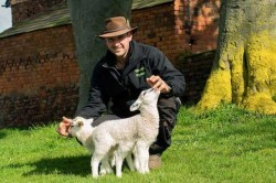 تولید گوسفند شش پا در انگلیس + عکس