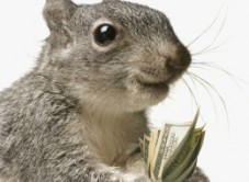 سنجابی که 300000 دلار به یک ساختمان صدمه زد