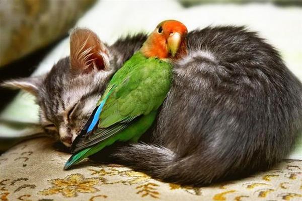 cute kitten 3 تصاویر فوق العاده زیبا از بچه گربه های ناز