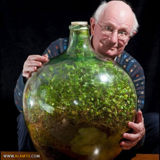 old-bottle-garden