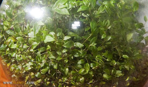 باغچه ای که 40 سال است آب نخورده +عکس