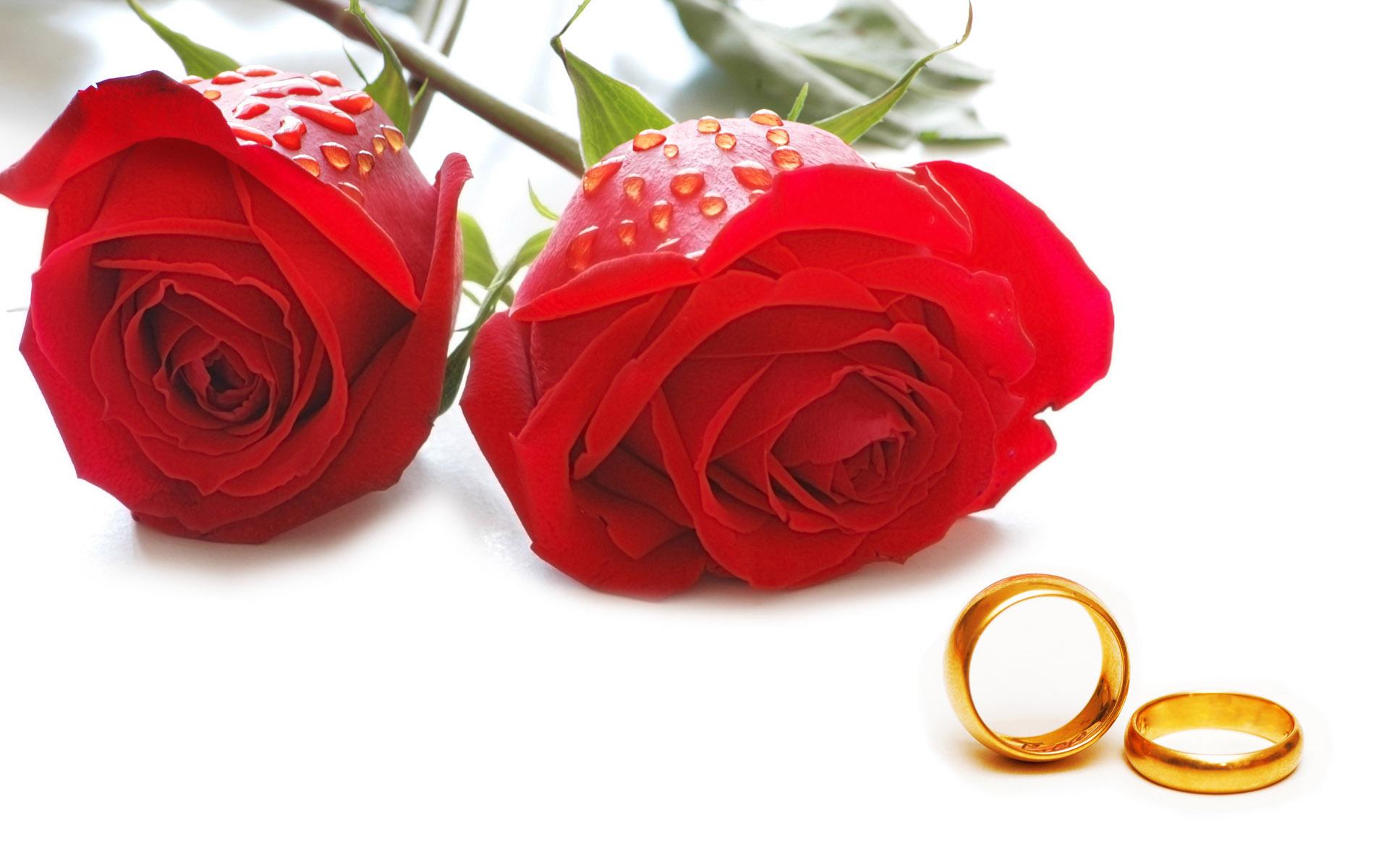 عشق / گل رز قرمز,انواع مختلف عشق