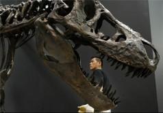 کشف گونه جدید از دایناسور «تیرکس»+عکس