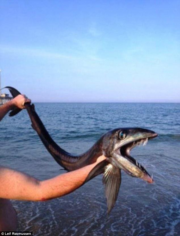 کشف ماهی ترسناک + عکس