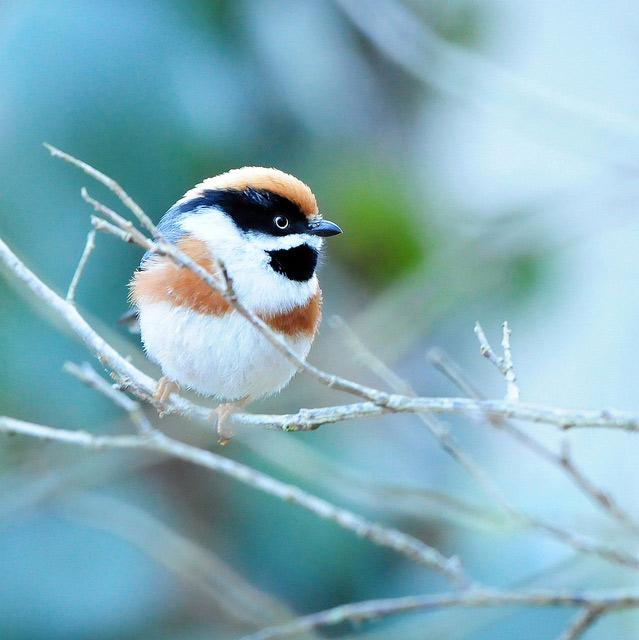 Birds 001 تصاویر پرندگان قشنگتر در طبیعت
