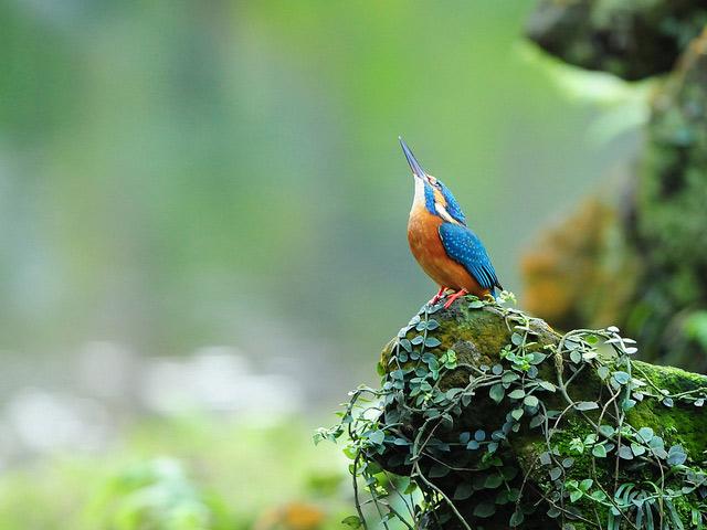 Birds 003 تصاویر پرندگان قشنگتر در طبیعت