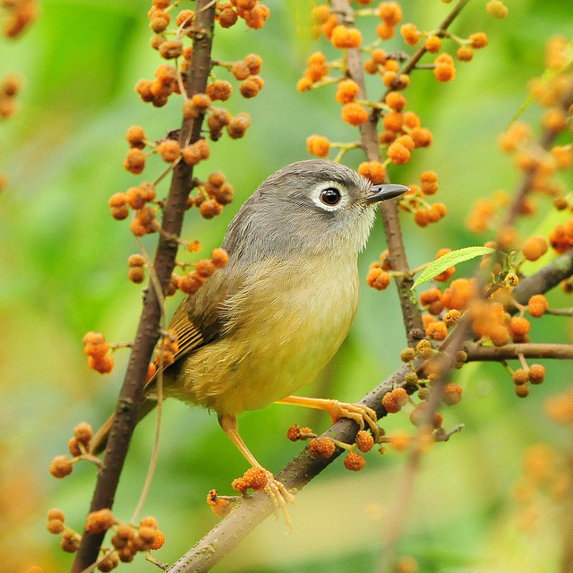 Birds 005 تصاویر پرندگان قشنگتر در طبیعت