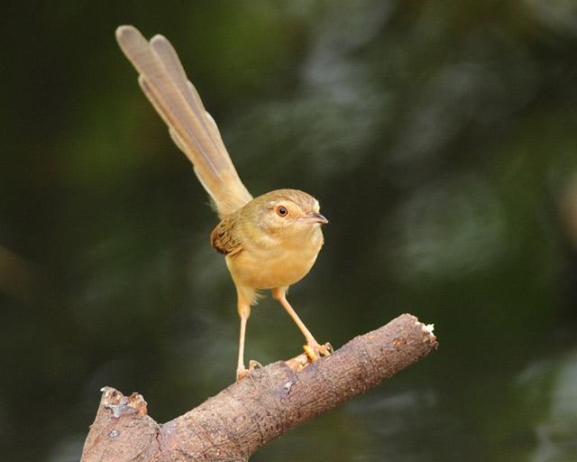 Birds 006 تصاویر پرندگان قشنگتر در طبیعت