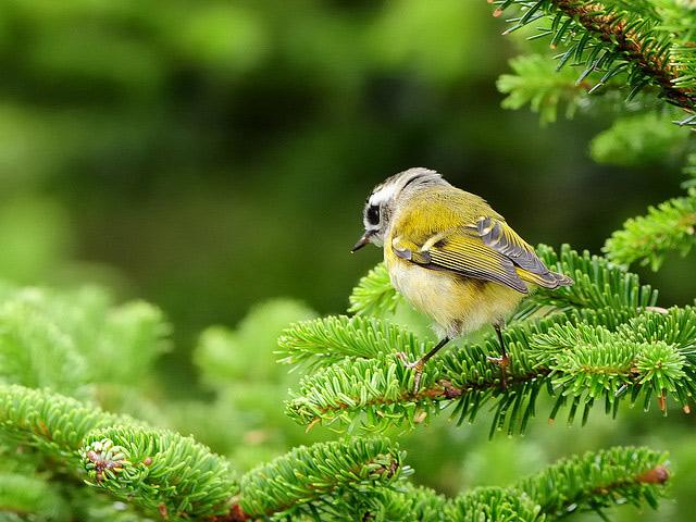 Birds 007 تصاویر پرندگان قشنگتر در طبیعت
