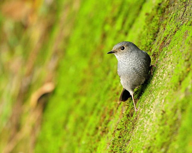 Birds 008 تصاویر پرندگان قشنگتر در طبیعت