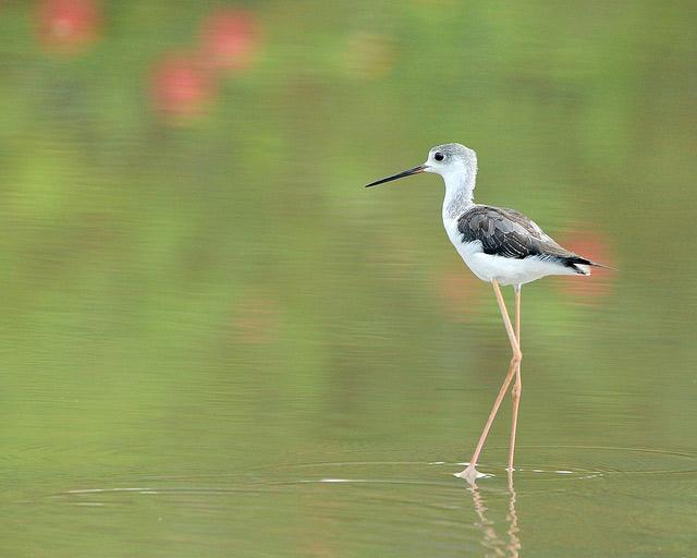 Birds 009 تصاویر پرندگان قشنگتر در طبیعت