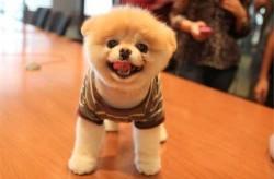 سگی که عاشقش خواهید شد/عکس