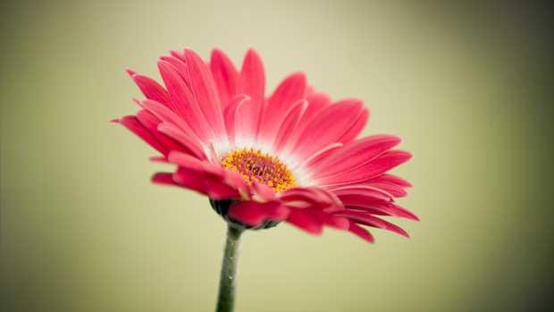 گل Flower