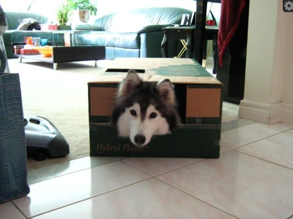 Tally-the-dog2