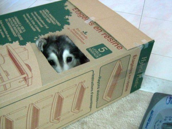 Tally-the-dog
