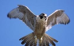 5 پرنده رکوردشکن در دنیا +عکس