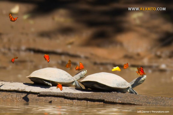 turtle-tears3