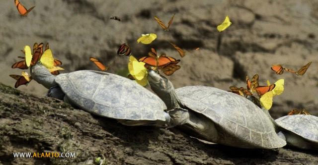 turtle-tears4