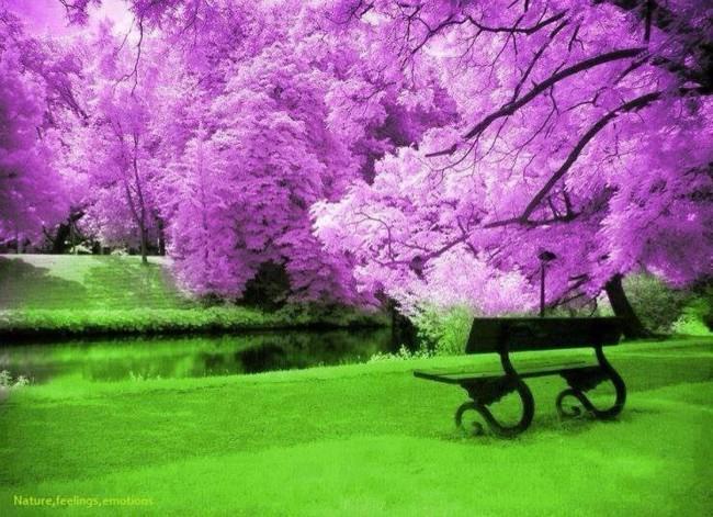 106 عکس های شگفت انگیز طبیعت