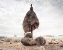 آشیانههای عظیم الجثه پرندگان بر روی تیرهای برق + عکس