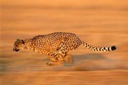 ۱۰ عکس بی نظیر از حیات وحش