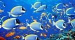 تحقیق درباره گرمایش زمین و نقش ماهی ها در کاهش آن