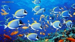 چگونه ماهیها گرمای زمین را کم میکنند؟