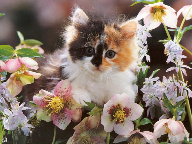 Funny Cat 0011 گربه های ناز پشمالو / عکس