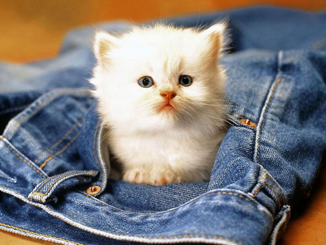 Funny Cat 0081 گربه های ناز پشمالو / عکس