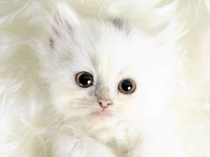Funny Cat 0111 گربه های ناز پشمالو / عکس