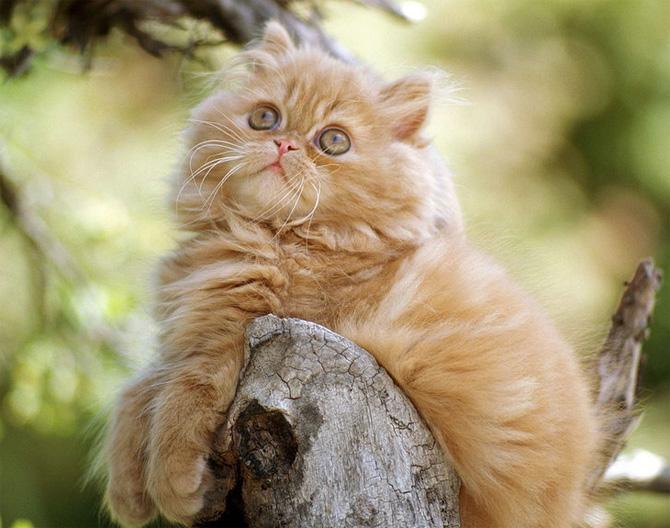 Funny Cat 0121 گربه های ناز پشمالو / عکس