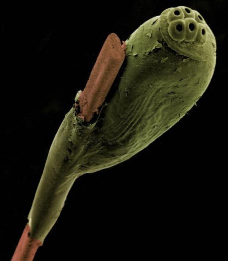 Microscopic-Images1