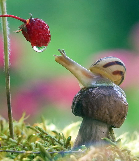 Macro Photos of Snails