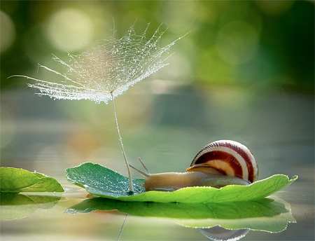Snail Photography