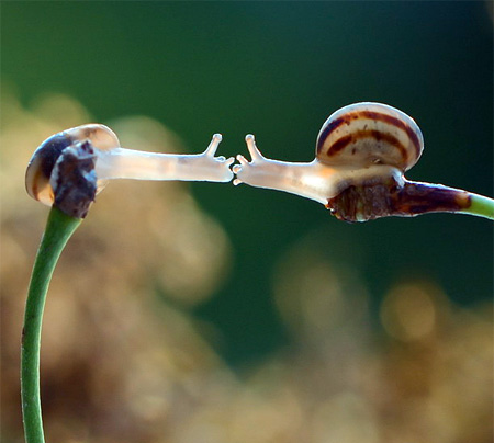 Macro Photography Snails