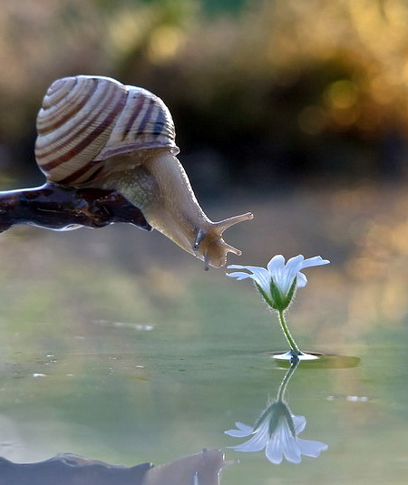 Life of Snail