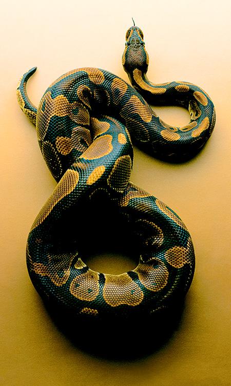 Snake Photos