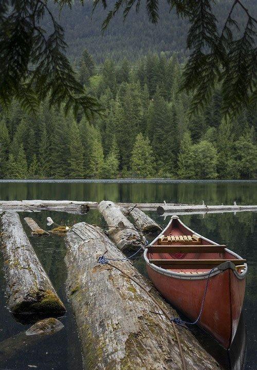 zimg 019 74 عکس های شگفت انگیز طبیعت