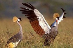 عکسهای دیدنی از دنیای حیوانات/۵مرداد۹۳