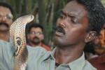 مرد هندی که کشندهترین مارهای جهان را افسون میکند+عکس