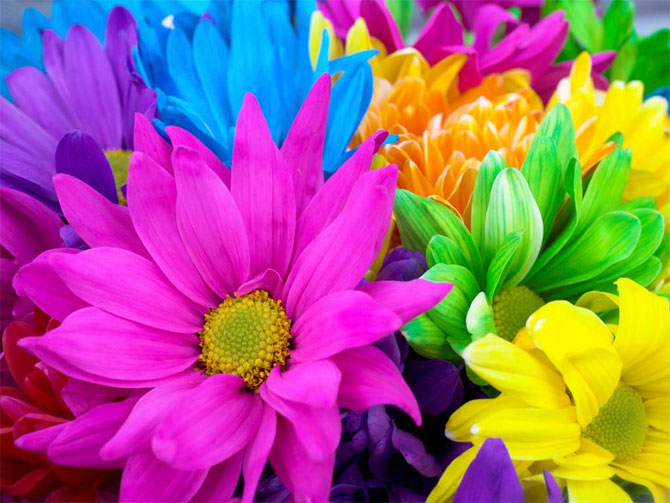beautiful colorful photo 15 تصاویر زیبا و رنگارنگ