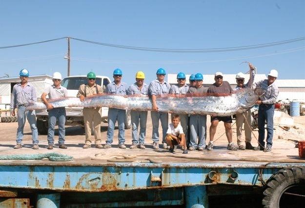 بزرگ ترین گونه ماهی جهان