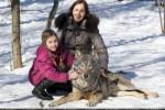 خانوادهای که گرگ، حیوان خانگیشان است + عکس