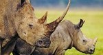 عکسهای دیدنی از دنیای حیوانات/5شهریور93