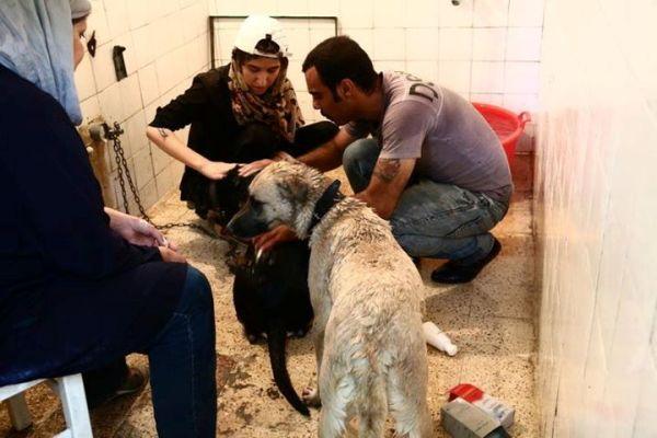 خیریه ای برای حیوانات