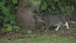 جزیرهای که در اشغال گربهها است +عکس