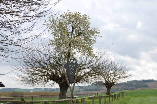 شگفت انگیزترین درخت دنیا