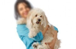 پذیرایی در مهد ویژه سگها با کله پاچه
