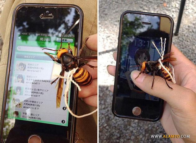 pet-killer-hornet4