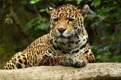 عکسهای دیدنی از دنیای حیوانات/13شهریور93
